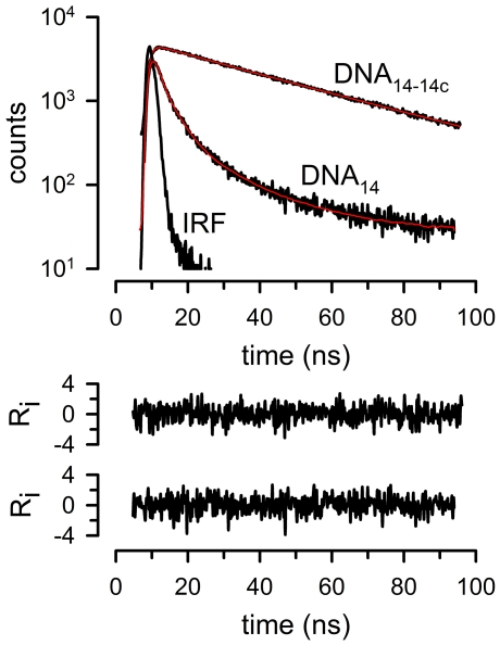 Long lifetime of pyrene-4-maleimide excimer emission. DNA 14 : reduced single-stranded DNA 14 adduct. DNA 14-14c : double-stranded DNA 14-14c adduct. IRF: instrument response function. The red lines are fits of the data to multi-exponential functions, with the two weighted residuals (R i ) vs. time plots corresponding to the double-stranded (top) and single-stranded (bottom) data fits.