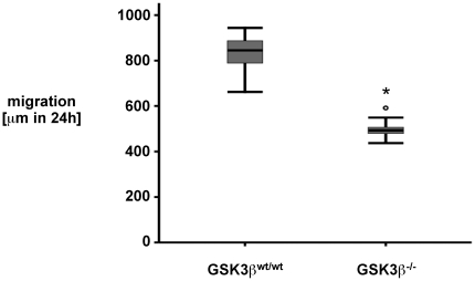 GSK3ß −/− mouse embryonic fibroblasts display reduced restitution in response to scrape-wounding as compared to GSK3ß wt/wt cells. Mouse embryonic fibroblasts (MEF) were prepared from GSK3ß −/− and GSK3ß wt/wt mice and grown to <t>confluency.</t> Cells were serum-starved overnight, standardized wounds were created using a razor blade and restitution was monitored over 24 h using serial microphotography. Data are expressed as median and interquartile range (IQR) of n = 9 independent wounds per condition. Statistical analysis was performed by the Kruskal-Wallis test for non-parametric data (*p