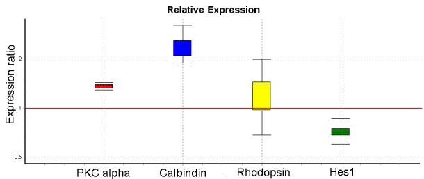 Quantitative real time PCR data for ciliary epithelium (CE)-derived cell cultures following in vitro differentiation. RNA was isolated from CE-derived cells after in vitro differentiation on poly-D-Lysine, laminin coated plates in the presence of 1% serum and 10 ng/ml basic fibroblast growth factor (bFGF) and epidermal growth factor (EGF) for 20 days. The data was analyzed using REST software for the relative quantification. The expression ratio represents the ratio of expression in differentiated compared to undifferentiated cultures. After differentiation, protein kinase α (PKCα; p
