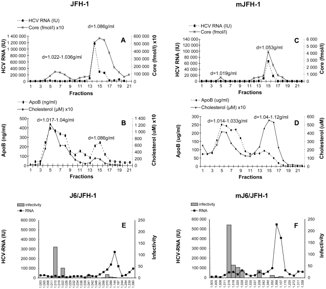 Iodixanol gradient analysis of the JFH-1 and J6/JFH-1 strains produced in vitro and in vivo . The supernatants from infected Huh7.5 cells producing JFH-1 (JFH-1, shown in A and B) and J6/JFH-1 (shown in E) were subjected to isopycnic centrifugation through iodixanol gradients, as described in Materials and Methods . Pooled serum samples from the chimeric uPA-SCID mice were also subjected to centrifugation on the same type of gradient. Representative profiles are shown in C and D for mice inoculated with JFH-1 (mJFH-1) and in F for mice inoculated with J6/JFH-1 (mJ6/JFH-1). HCV core antigen in gradient fractions was quantified by ELISA, HCV RNA was quantified by RT-qPCR, and ApoB and cholesterol were determined by ELISA. Infectivity for fractionated J6/JFH-1 (representative for both strains) grown in Huh7.5 cells is shown in E and that for the corresponding mouse serum (mJ6/JFH-1) is shown in F. The fractions (25 µl) were used to infect Huh7.5 cells. Cells were incubated for 48 h at 37°C; total RNA was then extracted and HCV-RNA levels were quantified by RT-qPCR. The results were normalized, taking into account the initial HCV-RNA content in each sample analyzed, as determined by RT-qPCR, and are expressed as a ratio of these two values.