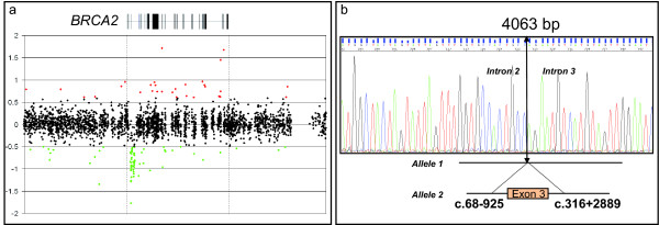 Genomic analysis of the Δ3 BRCA2 large rearrangement . a: Dedicated BRCA2 CGH array . The gene is represented at the top, with vertical boxes that indicate exon positions and sizes. Black plots are considered to be within the diploidy range (the y axis gives the log2 intensity ratios). The green dots indicate signals that were below the threshold for deletion (-0.4 log2 ratio). b: Sequence analysis of the smaller PCR product obtained by long-range PCR of proband DNA with the exon 3 large rearrangement in BRCA2 (Hg18/build36, 2006). The sequence crosses the breakpoint that begins in intron 2 and ends in intron 3.