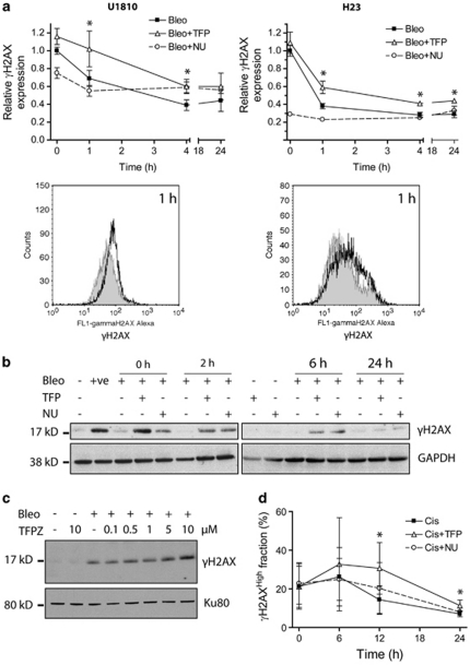 Phenothiazines delay γ H2AX resolution in human lung cancer cells. Cells were exposed to DNA-damaging agents alone or in combination with TFP or NU7026 (both 10 μ M). ( a ) TFP significantly delayed the resolution of γ H2AX in U1810 and H23 cells exposed to 7.5 μ g/ml bleomycin (top left) and 5 μ g/ml bleomycin (top right), respectively. Phosphorylation of H2AX (Ser139) was quantified by flow cytometry using Alexa Fluor 488-conjugated antibodies. The histograms below highlight differences in cellular Alexa Fluor 488-associated fluorescence at 1 h post-bleomycin treatment: shaded, bleo; unshaded, bleo+TFP. For bleomycin-treated cells, the kinetics of γ H2AX resolution is indicated by fold changes in the geometric mean of Alexa Fluor 488-associated fluorescence. An arbitrary value of 1 is assigned to samples collected immediately after bleomycin treatment in the absence of TFP ( t =0 h). ( b ) TFP retarded the resolution of γ H2AX in U1810 cells exposed to 2.5 μ g/ml bleomycin. Phosphorylated H2AX was detected by immunoblotting. ( c ) TFPZ impaired the resolution of γ H2AX in U1810 cells 1 h after exposure to 15 μ g/ml bleomycin. ( d ) TFP impeded the resolution of γ H2AX in U1810 cells exposed to 50 μ M cisplatin. As cisplatin induced γ H2AX only in a subset of cells, the kinetics of γ H2AX resolution in cisplatin-treated cells is defined by changes in the percentage of cells exhibiting high Alexa Fluor 488-associated fluorescence ( γ H2AX High (%)). For ( a and d ), mean and S.D. were compiled from three independent experiments performed in duplicates ( * P