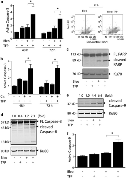 TFP augments the activation of both the extrinsic and the intrinsic apoptotic pathways after DNA damage. U1810 cells were exposed to DNA-damaging drugs (2.5 μ g/ml bleomycin, 20 μ M cisplatin) alone or in combination with TFP (10 μ M). For immunoblotting and FLICA assay, samples were collected 48 h post DNA-damaging treatment. ( a ) TFP augmented caspase-3 activation after bleomycin treatment (left); enhanced caspase-3 activation was detected predominantly in cells containing 4n DNA content (right). ( b ) TFP potentiated caspase-3 activation after cisplatin treatment. ( c ) TFP co-treatment resulted in increased cleavage of PARP. ( d ) TFP co-treatment resulted in increased cleavage of caspase-8. ( e ) TFP co-treatment resulted in increased cleavage of caspase-9. ( f ) TFP-co-treated cells contain increased levels of catalytically active caspase-9. For ( a , b and f ), mean and S.D. were compiled from three independent experiments performed in duplicates ( * P