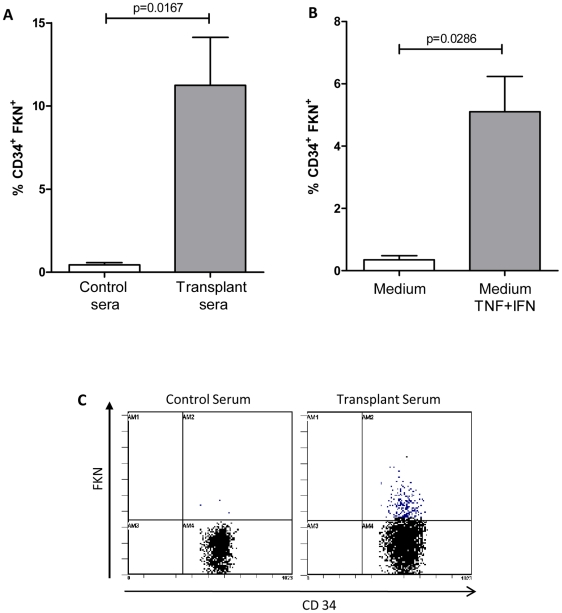 FKN expression is induced on CD34 + circulating progenitors by inflammatory cytokines and KTR sera. FKN expression was assessed by flow cytometry after gating of CD34 + cells within PBMC isolated from healthy donors after 20 h treatment with ( A ) sera from transplant patients with high % of CD34 + FKN + cells or with ( B ) TNF-α (20 ng/ml) and IFN-γ (50 ng/ml). Serum from healthy blood donors or control medium served as controls. ( C ) FKN expression was also induced on CD34 + cells gated within CD133-purified progenitors after a 20 h treatment with sera from transplant patients.