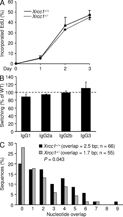 Xrcc1 +/− cells have shorter overlaps in switch junctions. (A) DNA synthesis in Xrcc1 +/+ and Xrcc1 +/− splenic B cells. Cells were cultured with LPS and IL-4 in the presence of EdU. Error bars represent the SD of values from two independent experiments with one mouse per genotype per experiment. (B) Percentage of switching to the indicated isotypes by Xrcc1 +/− cells relative to Xrcc1 +/+ cells after 4 d in culture. Wild-type (WT) levels (dotted line) were 37% for IgG1, 17% for IgG2a, 32% for IgG2b, and 3% for IgG3. Error bars signify the SD of values from three independent experiments with two mice per genotype per experiment. (C) Microhomology in S μ -S γ 3 switch joins from cells stimulated with LPS. Lengths of overlaps are depicted on the x-axis, and mean overlap for number ( n ) of sequences from two independent experiments with two mice per genotype per experiment is shown in the inset. Statistical difference was determined by the Mann-Whitney test.