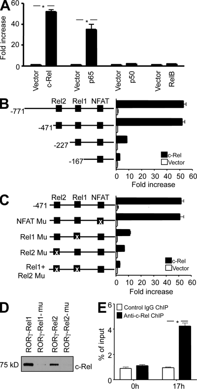 """c-Rel binds to and activates the Rorg promoter through two specific Rel sites. (A) EL4 cells were transiently transfected with murine Rorg promoter luciferase construct together with an expression vector for full-length c-Rel, p65, p50, or RelB, or the empty vector as indicated. After 24 h, cells were treated with PMA and ionomycin for 5 h, and the luciferase activities measured. The promoter activity is presented as fold increase over cells transfected with empty vector. To normalize the transfection efficiency across samples, the Renilla luciferase expression vector pRLTK was included as an internal control. (B) Deletion mutants of the Rorg promoter were analyzed in the luciferase reporter assay with or without c-Rel co-transfection. Putative binding sites for c-Rel (Rel1 and Rel2) and NFAT are indicated. (C) WT and Rel or NFAT site-mutated Rorg promoter constructs were analyzed in the luciferase reporter assay with or without c-Rel co-transfection. The Rel1 site was mutated to TGGGACTCG (−201 to −193), the Rel2 site to CTGAAGTGC (−288 to −280), and the NFAT site to TTGTCAC (−96 to −90). The """"X"""" indicates the mutated site. (D) Nuclear extracts were prepared from EL4 cells after stimulation for 6 h with PMA and ionomycin. Biotinylated Rorg Rel oligonucleotides or their mutants were absorbed by streptavidin-agarose beads, and then added to the nuclear extracts. The amount of c-Rel proteins in the precipitates were assessed by immunoblotting with anti–c-Rel. (E) Purified CD4 + T cells from 6-wk-old WT mice ( n = 3) were cultured under Th17 differentiation conditions, as described in Materials and methods. After 17 h, cells were fixed, and ChIP was performed using anti–c-Rel or control IgG. *, P"""