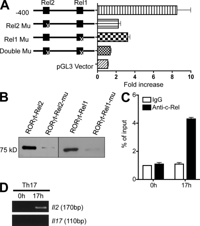 """c-Rel binds to and activates the Rorgt promoter through two Rel sites. (A) WT and Rel site-mutated Rorgt promoter constructs and the empty vector were analyzed in a luciferase reporter assay with c-Rel co-transfection. The """"X"""" indicates the mutated (Mu) Rel site. Data are representative of three independent experiments. (B) Nuclear extracts were prepared from EL4 cells after stimulation for 6 h with PMA and ionomycin. Biotinylated Rorgt Rel oligonucleotides or their mutants were absorbed by streptavidin-agarose beads, and then added to the nuclear extracts. The amount of c-Rel proteins in the precipitates were assessed by immunoblotting with anti–c-Rel. (C) Purified CD4 + T cells from 6-wk-old WT mice ( n = 3) were cultured under Th17 differentiation condition as described in Materials and methods. After 17 h, cells were fixed, and ChIP was performed using anti–c-Rel or control IgG. Data are representative of two independent experiments. (D) Purified CD4 + T cells from 6-wk-old WT mice ( n = 3) were cultured under Th17 differentiation conditions, as described in Materials and methods. After 17 h, cells were fixed, and ChIP was performed using anti–c-Rel. Data are representative of two independent experiments."""