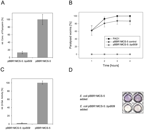 BpiB09 affects the QS-dependent pyocyanin production, C. elegans paralysis in <t>PAO1</t> and decreases AHL response in A. tumefaciens AHL reporter strain. A ) Decreased pyocyanin production. OD 520 of pyocyanin extracts from culture supernatants of P. aeruginosa carrying pBBR1MCS-5:: bpiB09 and empty pBBR1MCS-5. Data represent mean values of at least five independent experiments. Bars indicate the standard deviations. B ) C. elegans paralysis induced by PAO1 on <t>BHI</t> medium. Data represent mean values of eight independent assays per treatment (+/−) standard error. Incubation was carried out on BHI agar plates at room temperature. Per PAO1 strain eight replicate plates were assayed, each with 30 one-day-old adult C. elegans . GLM analysis revealed a significant PA strain effect between the PAO1 wildtype and pBBR1MCS-5:: bpiB09 (Likelihood ratio test, χ 2 = 132.04, df = 1, P
