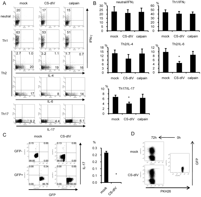Calpastatin-overexpression in Th cells resulted in decreased IL-6 and IL-17 production. (A) Naïve CD4 + T cells were cultured under neutral, Th1, Th2, or Th17 conditions. On day 1, these cells were infected with mock-GRV or calpain- or CS-dIV-GRV and expanded on day 2 with IL-2. On day 4 (Th17 conditions) or on day 6 (neutral, Th1, and Th2 conditions), the cells were restimulated with PMA/ionomycin for ICS. Representative results for GFP + -gated cells are shown (n = 11 for IFNγ, n = 10 for <t>IL-4,</t> n = 6 for IL-6 and IL-17). (B) Statistical analysis of the results in panel A by Steel's test. (C) Naïve CD4 + T cells were cultured under neutral conditions and infected with mock-GRV or CS-dIV-GRV. On day 6, these cells were restimulated with PMA/ionomycin for FACS. Representative data of GFP + , GFP − -gated cells are shown in the left panel, and the statistical analysis is shown in the right panel (n = 3) (D) Retrovirus-infected Th cells were stained with PKH-26 dye and then stimulated with anti-CD3/28 monoclonal antibodies. The fluorescence intensity of the PKH-26 dye in infected (GFP + ) and non-infected (GFP − ) cells was analyzed by FACS. *p