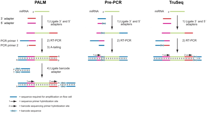 Comparative schematic of small <t>RNA</t> barcoding methods. The three methods start with ligation of a 3' and 5' RNA adapter to generate a substrate for RT-PCR. In the pre-PCR barcoding method, the barcode is incorporated in the 5' adapter. In the <t>TruSeq</t> method, the barcode is incorporated in one of the RT-PCR primers. In the PALM barcoding method, the amplified RT-PCR product is A-tailed and ligated to a T-tailed barcoded adapter.