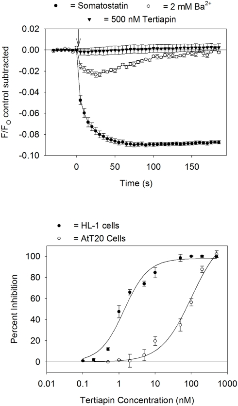 Block of GIRK channels by Ba 2+ and tertiapin-Q . Top panel: somatostatin-sensitive fluorescent signal measured in AtT20 cells pretreated for 5 min with either 2 mM BaCl 2 or 500 nM tertiapin-Q. Each point represents the mean ± SE value obtained in six wells in one plate. Bottom panel: dose versus response curve for tertiapin-Q block of the HL-1 cell (carbachol stimulation) or AtT20 cell (somatostatin stimulation) GIRK fluorescent signal. Each point represents the mean ± SE inhibition obtained from three to five experiments. Calculated IC 50 values for tertiapin-Q block were HL-1 cells = 1.4 nM, AtT20 cells = 102 nM.