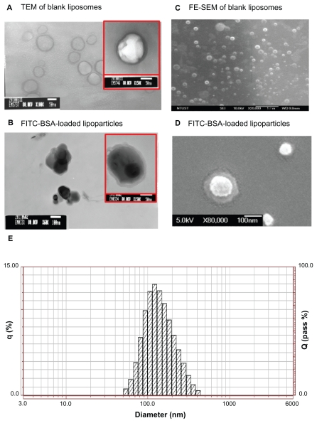 TEM image (left) and FE-SEM image (right) with 1% uranyl acetate negative staining. ( A ) FITC-BSA-loaded liposomes and ( B ) FITC-BSA-loaded lipoparticles. ( C ) FITC-BSA-loaded liposomes and ( D ) FITC-BSA-loaded lipoparticles. The scale bar is 100 nm. ( E ) Particle size distribution of FITC-BSA-loaded lipoparticles containing a protamine/FITC-BSA core. Abbreviations: TEM, transmission <t>electron</t> microscope; FE-SEM, <t>field-emission</t> <t>scanning</t> electron microscope; FITC-BSA, fluorescein isothiocyanate-conjugated bovine serum albumin.