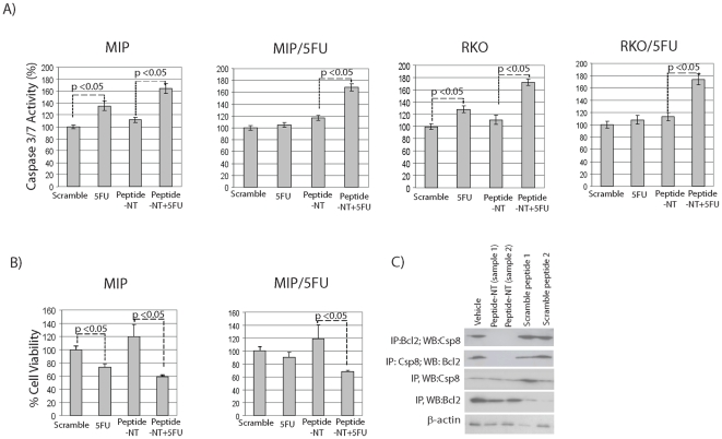 Augmentation of apoptosis by peptide-NT. Sensitive MIP101 or RKO and 5-FU resistant MIP/5FU and RKO/5FU cells were incubated with peptide-NT 100 ng/ml +/− 5-FU 5 µM for 24 hrs and assayed for ( A ) caspase 3/7 levels, or ( B ) cell viability by MTT assays. ( C ) Immunoblots showing the ability of peptide-NT to interfere with the interaction between caspase 8 and <t>Bcl2:</t> MIP/5FU cells were incubated with peptide-NT or scramble control peptides 1 or 2 for 24 hrs; cell pellets were collected 24 hrs later for co-immunoprecipitation studies.