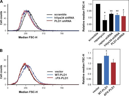 hVps34 and <t>PLD1</t> regulate cell size. (A) HEK293 cells were transduced with lentiviruses expressing <t>shRNAs</t> for raptor, hVps34, or PLD1, puromycin selected, and then subjected to cell size measurement of median forward scatter-height. The result of overnight treatment with 100 nM rapamycin is included as a control. Representative histograms are also shown, with cell counts in arbitrary units. (B) Cells were transfected with wt- or ΔPX-PLD1 together in pCDNA3 (vector), selected with G418 for 3 d, and then subjected to cell size measurement as described in A. A one-sample t test was performed to compare each data with the control. Three independent experiments were performed, and the results of mean ± SD are shown in the graphs. *, P