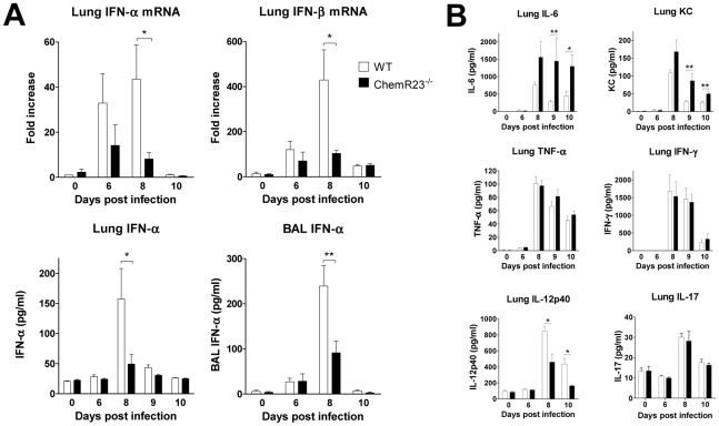 Reduced levels of type I IFNs and IL-12p40 in ChemR23 −/− infected mice. At selected time points after infection, lungs and/or broncho-alveolar lavage fluids obtained from wild-type (WT) (white bars) and ChemR23 −/− mice (black bars) were assessed for cytokine transcripts or proteins. ( A ) Lung IFN-α and IFN-β transcripts were assayed by qRT-PCR (upper panels). IFN-α levels were also determined by ELISA in lung homogenates (lower left panel) and broncho-alveolar lavage fluids (lower right panel). ( B ) Chemokine (KC/CXCL1) and cytokines (IFN-γ, TNF-α, IL-6, IL-12p40 and IL-17) levels were determined by ELISA in lung homogenates. Data are the mean ± SEM for groups of seven animals and are representative of three independent experiments. *, p