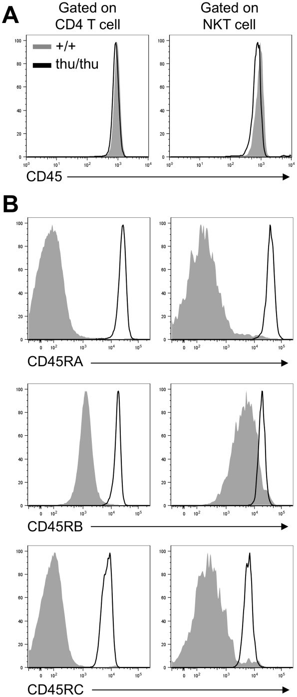 hnRNPLL is required for the splicing of CD45 isoforms in NKT cells. Representative overlay histograms of (A) CD45 and (B) CD45RA, CD45RB and CD45RC expressions on wild type (+/+) (shaded grey) and Hnrpll thu/thu (thu/thu) (black line) CD4 T cells and NKT cells in the thymus (Data are representative of two independent experiments with n = 2–3 mice per group in each).