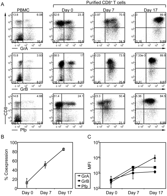 Expression of lytic molecules during the in vitro expansion of primary CD8 + T cells. (A) Expression of GrA, GrB and Pfp in human PBMC and purified CD8 + T cells at days 0, 7 and 17 after stimulation with anti-CD3/CD28 mAb-coated beads in the presence of IL-2, <t>Il-7</t> and IL-15. Cells were stained with anti-CD8, anti-GrA, anti-GrB and anti-Pfp mAbs and analyzed by flow cytometry. The expression levels of GrA, GrB and Pfp are plotted against the CD8 marker. The values in each plot show the frequency of each subset in the cell population. The data are from one representative donor out of 3 analyzed in a similar way. (B) Frequency of the cells expressing the three lytic molecules GrA, GrB and Pfp. Percentage of co-expression was measured by first gating the CD8 and GrA positive cells and then on the GrB and Pfp positive cells. The mean percentage and SD of the resulting population at days 0, 7 and 17 are shown (n = 3). (C) The mean fluorescence intensity (MFI) of GrA, GrB and Pfp for CD8 + cells at days 0, 7 and 17 are shown (n = 3).