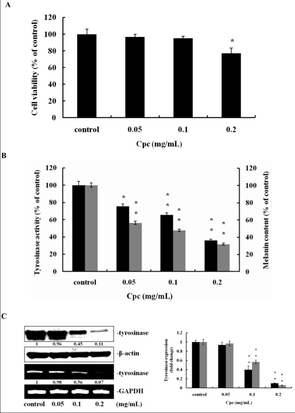 Effect of Cpc on viability of B16F10 melanoma cell, tyrosinase activity and melanin contents . Cells were treated with Cpc (0.05, 0.1, 0.2 mg/mL) for 72 hrs. (A) Cell viability was determined by MTT assay as described in Materials and Methods. (B) Tyrosinase activity (black) and melanin content (grey) were measured. (C) The expression of tyrosinase was determined by immunoblotting analysis (black) and RT-PCR (grey), using β-actin and GAPDH as internal standards, respectively. Data were expressed at mean ± SD from three different experiments. The asterisk (*) indicates a significant difference from control group (*, P