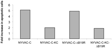 Comparative analysis of the apoptosis induction of non-replication versus replication-competent B19R deletion mutants. The different stages of cell cycle and the percentage of cells with subG 0 DNA content were analyzed by propidium iodide (PI) staining and FACS analysis. HeLa cells were mock-infected or infected at an MOI of 5 with NYVAC-C, NYVAC-C-KC, NYVAC-C-ΔB19R or NYVAC-C-KC-ΔB19R. At 24 hours post-infection cells were harvested and processed as described in Materials and Methods . The percentage of cells with hypodiploid DNA content was determined using an LSR II flow cytometer (Becton Dickinson). The results are expressed as fold increase in apoptotic cells with respect to uninfected cells.
