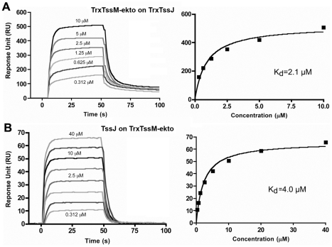 Measure of the interaction between TssM-ekto and TssJ by Surface Plasmon Resonance. ( A ) Sensorgram and saturation curve of the titration of Trx-TssJ by Trx-TssM-ekto. The CM5 chip (BIAcore) was coated with TssJ N-terminal thioredoxine fusion with 600 response units (RU) and the Trx-TssM-ekto was injected in the microfluidic channel. ( B ) Sensorgram and saturation curve of the titration of Trx-TssM-ekto by TssJ. The CM5 chip was coated with TssM-ekto N-terminal thioredoxine fusion with 3000 response units, and TssJ was injected in the microfluidic channel. The K D values were obtained using the fitting tool of the BIAevaluation software (BIAcore).