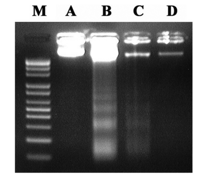 RT-PCR analysis of the mRNA levels of p53 and Bax. * Represents p
