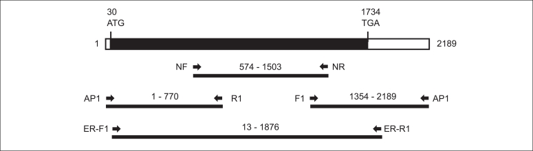 Cloning strategy and schematic view of SB ER cDNAs. The open reading frame is represented by a thick black line. The positions of the start codon (ATG) and the stop codon (TGA) are indicated. The binding sites of two degenerated primers (NF and NR) and four gene-specific primers (R1, F1, ER-F1, and ER-R1) are shown. The AP1 primer was provided in the RACE kit (Clontech Lab, CA, USA). The complete cDNA sequence was determined by overlapping the PCR products using the Chromas 3.2 analysis program. SB ER: striped bitterling estrogen receptor, AP1 primer: adaptor primer, RACE kit: Marathon cDNA Amplification kit.