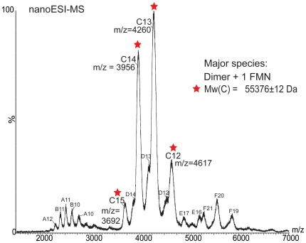 Nano-ESI mass spectrum of intact Rv2607 with co-purified FMN. The major species, C , has peaks with charges ranging from 15+ to 12+ in the 3500-4500 m/z range that correspond to a molecular weight of 55376±12. This experimental mass is consistent with the calculated mass for the complex of dimeric Rv2607 with one molecule of FMN bound (55442 Da), which is derived from the amino acid sequence of the 6x-histidine tagged Rv2607 (54986 Da; 27493 Da per protomer) and the molecular weight of FMN (456 Da). Monomeric tagged Rv2607 and truncated Rv2607 monomer (missing 10-11 residues), are present in solution and correspond to molecular weights of A (27450±52 Da) and B (26215±54 Da) respectively. A minor dimeric species comprised of full length and truncated monomer is represented as species D . Higher molecular weight oligomers (trimers E and tetramers F with molecular weights of 110.6 and 82.7 kDa, respectively) are electrospray-induced non-specific association of monomers and dimers.