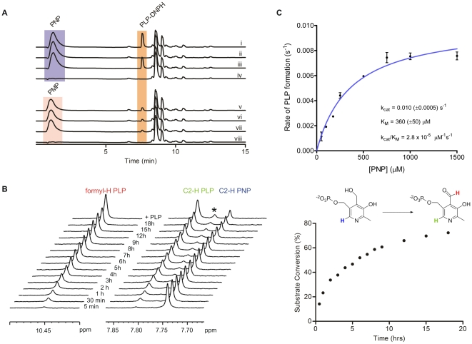 Reverse-phase HPLC, NMR, and spectrophotometric analysis of the PNPOx activity of Rv2607. (A) HPLC chromatograms (270 nm) of reaction mixtures containing PNP (i-iv) or PMP (v-viii), FMN, and Rv2607, and the associated control reactions. All reactions were carried out in 25 mM potassium phosphate buffer (pH 7.8), incubated at 25°C for 3 h, and quenched with DNPH (0.7 mM final concentration). Where present, the reaction components were at the following concentrations: 1 mM PNP or PMP, 10 µM FMN, and 10 µM Rv2607. Reaction mixtures contained: (i) PNP, FMN, and Rv2607, (ii) PNP and FMN (enzyme negative control), (iii) PNP and Rv2607 (no added FMN), (iv) FMN and Rv2607 (substrate negative control), (v) PMP, FMN, and Rv2607, (vi) PMP and FMN (enzyme negative control), (vii) PMP and Rv2607 (no added FMN), (viii) FMN and Rv2607 (substrate negative control). The peak to the right of PLP-DNPH is DNPH, which has a retention time of 8.6 min. (B) 1 H NMR analysis of the conversion of PNP into PLP with time. The enzymatic reaction (1 mM PNP, 28 µM enzyme, 10% D 2 O in 25 mM potassium phosphate buffer, pH 7.8) was incubated for 18 hours at 298 K in the spectrometer. Left; stacked 1 H NMR spectra recorded at various time points and after the addition of authentic PLP. The starred peak corresponds to PLP hydrate. Right; a plot of percent substrate conversion versus time. Substrate conversion was determined by comparing integrals of the C2- 1 H signals associated with PLP (7.80 ppm) to that of PNP (7.75 ppm). (C) Michaelis-Menten plot for Rv2607 with PNP as a substrate. The rate of PLP formation was monitored spectrophotometrically (λ max = 388 nm, ε = 4900 cm −1 M −1 ) for various concentrations of PNP. All solutions were made in 100 mM potassium phosphate buffer (pH 7.8).