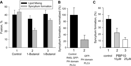 Inhibition of gp64-initiated syncytium formation by lowering the concentration of accessible PtdIns(4,5) P 2 in the plasma membrane ( A ) Butan-1-ol application to Sf9 Op1D cells immediately after the end of low pH application inhibited syncytium formation (grey bars), but had no effect on lipid mixing (black bars). In control experiments, the cells were treated with t -butanol that, in contrast with butan-1-ol, does not induce PtdIns(4,5) P 2 depletion. ( B ) Expression of the PLCδ1PH–GFP construct in Sf9 Op1D cells inhibited cell fusion that was triggered 24 h post-transfection. Syncytium formation for the cells expressing PLCδ1PH–GFP was normalized to that observed for the cells expressing the PLCδ1PH–GFP mutant R40L. ( C ) Inhibition of syncytium formation by Sf9 Op1D cells by PBP10 (10 or 25 μM, bars 2 and 3) applied immediately after the end of low pH application. (1) Control with no reagents applied. For ( A ), ( B ) and ( C ), fusion between Sf9 Op1D cells was triggered by a 1 min application of pH 4.9 medium and assayed 20 min later. Results are means+S.E.M.