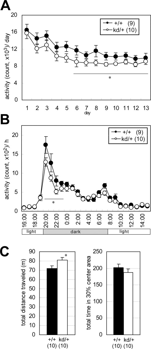 Spontaneous motor performance abnormalities in Zic2 kd/+ mice. (A) Home cage activity was measured for 13 days. On day 1 the mice were put into a new home cage. Mean activities per day are indicated. Activity counts represent the number of time bins (approximately 0.20–0.25 s each) in which spontaneous activity including locomotor activity, rearing, and other activities such as stereotypic movements, were detected. * P