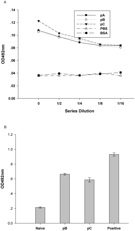 Characterization of FMDV protein and IL-6 production in BHK-21 cells. (A)Two days after transfection with either pA, pB or pC, and negative control (PBS) and irrelevant control (Bovine Serum Albumin, BSA) were added; BHK-21 cells were analyzed for expression of FMDV proteins by sandwich-ELISA. BHK-21 cell lysates were diluted twofold. The data are expressed as the mean OD for each dilution. (B) Expression of IL-6 was determined by assessing IL-6 levels in BHK-21 cell lysates by ELISA two-days after transfection. The data are expressed as the mean OD ± SEM, measured in duplicate. Means were compared by non-parametric ANOVA.