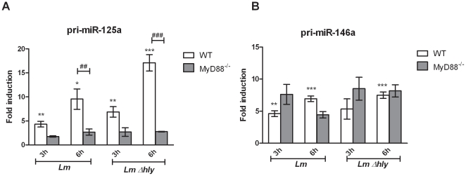 L. monocytogenes -induced transcriptional regulation of miR-146a and miR-125a. Bone marrow derived macrophages (BMDMs) were infected (MOI 10) with L. monocytogenes ( Lm ) and the LLO-deficient mutant Δhly ( Lm Δhly ) for 3 h and 6 h. Total RNA was extracted and the expression levels of primary transcript (pri)-miR-125a (A) and pri-miR-146a (B) were quantified by RT-qPCR using TaqMan assays. Data was normalized to the endogenous control gene HPRT1 and fold changes of miRNA induction in infected compared to control cells of each genotype were calculated by the 2 −ΔΔCT method. Data represents the mean ± SEM from three biological replicates. Statistical significance of miRNA expression between infected and non infected WT BMDMs was determined by the Student t -test; * P