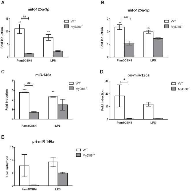 Regulation of miR-125a-3p/5p and miR-146a expression upon TLR2 and TLR4 stimulation. Wild type (WT; n = 3) and MyD88 −/− (n = 2) mouse bone marrow derived macrophages (BMDMs) were treated with 1 µg/ml ultra-pure LPS or 2 µg/ml Pam3CSK4 for 6 h. Total RNA was extracted and miRNA expression levels were quantified by RT-qPCR using TaqMan miRNA assays. MiR-125a-3p (A), miR-125a-5p (B) and miR-146a (C) expression in MyD88 −/− BMDMs. Pri-miR-125a (D) and pri-miR-146a (E) expression upon TLR stimulation in WT and MyD88 −/− BMDMs. Data was normalized to sno202 or HPRT1, endogenous controls for miR or pri-miR expression, respectively, and fold changes were calculated by the 2 −ΔΔCT method and expressed relative to non-infected control of each genotype. Data represents the mean ± SEM of at least two biological replicates. Statistical significance of miR/pri-miR induction was determined by the Student t -test compared to non infected control (* P