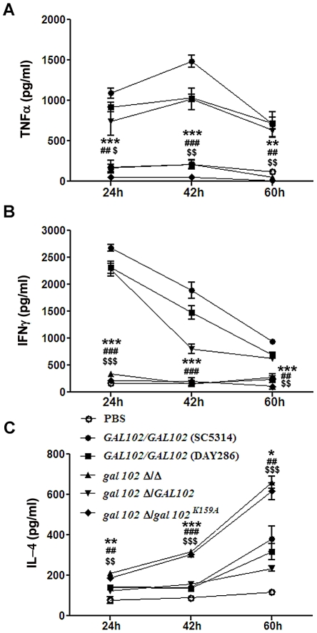 Reduced virulence is associated with the inability of gal102Δ/Δ to elicit pro-inflammatory cytokine response in the host. (A, B and C) Mice were infected intravenously with WT (SC5314 and DAY286), gal102Δ/Δ, and the GAL102 or the gal102 K159A mutant reintegrants in gal102Δ/Δ strains and were sacrificed at different time points for measurement of serum cytokine amounts. TNFα (A), IFNγ(B) and IL-4 (C) amounts were determined by ELISA. Sera from PBS treated mice were taken as control. Data are represented as means ± standard errors of the means from three separate experiments with sera of five mice. *** p