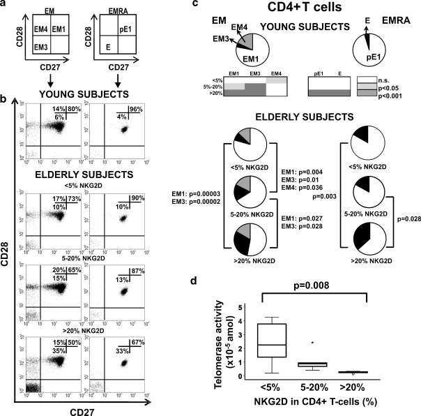 Distribution of EM and EMRA CD4+ T cells into subsets defined by CD28 and CD27 expression. a Schematic model of the EM and EMRA differentiation subsets according to CD28 and CD27 expression. b Representative dot plots of the subsets defined by CD27 and CD28 expression for individuals in each group. c Individual segments of the pie charts represent the proportions of cells with each combination of CD28 and CD27 in the EM and EMRA CD4 T cell subsets in young donors ( n = 20) and in the three NKG2D groups (