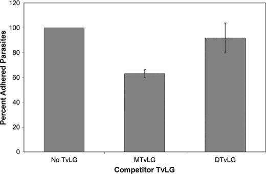 "Adherence of T. vaginalis strain B7RC2 to human vaginal ectocervical cells is inhibited by full-length but not partially digested TvLG. Human vaginal ectocervical cells were preincubated in media alone ( No TvLG ), mock-treated TvLG ( MTvLG ), or TvLG digested with β- N <t>-acetylhexosaminidase</t> and β-galactosidase ( DTvLG ) for 1 h before the addition of labeled parasites as described under ""Experimental Procedures."" The average number of parasites per coverslip was calculated, and the number determined in the absence of TvLG ( No TvLG ) was set as 100% adherence. Results presented are the average of three different experiments performed with a total of nine coverslips. Error bars , S.D."