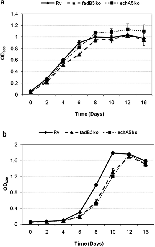 Growth kinetics of M. tuberculosis (H37Rv), echA5 mutant and fadB3 mutant in (a) <t>Middlebrook</t> <t>7H9-Tw-Glycerol-OADC</t> medium and (b) Sauton's minimal medium plus 0.2% glycerol. Results shown are the average of three independent experiments. Error bars represent SD.