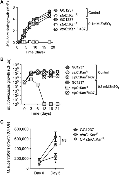 CtpC Is Involved in Zinc Detoxification and Contributes to the Intracellular Survival of M. tuberculosis (A) Differential sensitivity of M. tuberculosis wild-type and the ctpC null mutant to free zinc. M. tuberculosis wild-type (GC1237), a ctpC null mutant ( ctpC ::Kan R ), or the cosmid-complemented strain (I437) was allowed to grow in 7H9-ADC medium containing 0.1 mM ZnSO 4 or without zinc supplementation (Control). Bacterial growth was monitored by turbidity measurement (McFarland units). The data are representative of three independent experiments. (B) Differential sensitivity of M. tuberculosis wild-type and the ctpC null mutant to free zinc. M. tuberculosis wild-type (GC1237), a ctpC null mutant ( ctpC ::Kan R ), or the cosmid-complemented strain (I437) were allowed to grow in 7H9-ADC medium containing 0.5 mM ZnSO 4 or without zinc supplementation (Control). Bacterial growth was monitored by plating on agar and counting CFU. The data are representative of two independent experiments. (C) Differential ability of M. tuberculosis wild-type and the ctpC null mutant to replicate in human macrophages. M. tuberculosis wild-type (GC1237), a ctpC null mutant ( ctpC ::Kan R ), or a plasmid-complemented strain (CP) was used to infect human macrophages at a multiplicity of infection of one mycobacteria per ten cells. After 4 hr, cells were washed and incubated in fresh medium for 5 days. The data shown are means ±SD of intracellular CFU counts in an experiment carried out in triplicate and analyzed with Student's t test. ∗ p