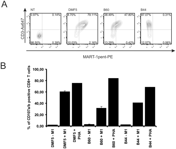 Electroporation of mRNA encoding MART-1 specific TcRs. (a) SupT1 were electroporated with or without 20 µg mRNA encoding the indicated TcR_2A. Twelve hours later, the cells were stained with HLA-A2/MART-1 multimer-PE and anti-CD3 Alexa Fluor 647. (b) Human PBMC were electroporated with 20 µg mRNA (same constructs as in (a)) and cultured for 4.5 hours. Following the addition of T2 cells pre-loaded or not (grey) with MART-1 peptide (10 µM final concentration), the cells were co-incubated for an additional 5 hours in the presence of anti-CD107a/b Alexa Fluor 647 antibodies, monensin and brefeldin A. Prior to analysis, cells were stained with anti-CD8 PE. The percentage of CD107a/b positive cells from the CD8 positive population is plotted. PHA was used to control for similar maximal degranulation levels regardless of the mRNA used for electroporation. Each bar represents the mean values of duplicates.