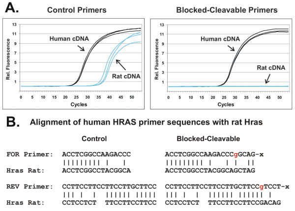 Increased specificity of rhPCR with complex DNA samples . A PCR assay specific for the human HRAS gene was used to compare the specificity of