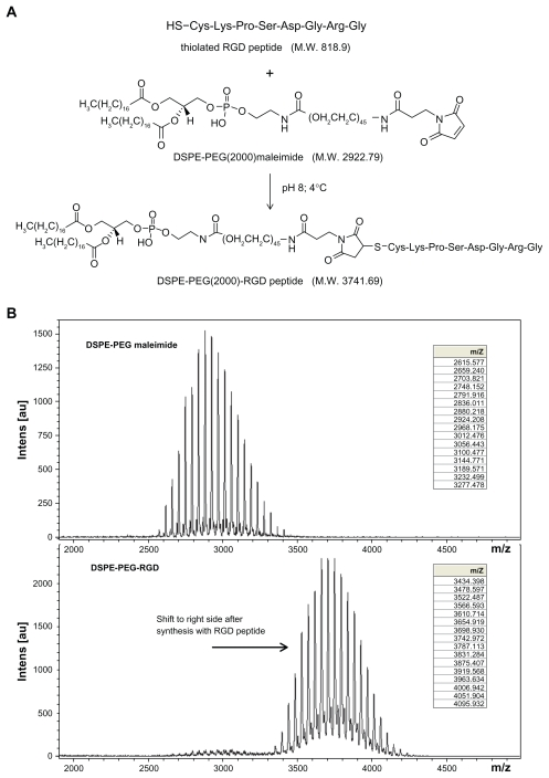 DSPE-PEG-RGD peptide conjugates ( A ), Schematic representation of synthesis of DSPE-PEG-RGD peptide conjugates ( B ) MALDI-TOF mass spectrometric analysis of the DSPE-PEG-RGD conjugate and parental DSPE-PEG maleimide, demonstrating an increase in mass from 2922.79 to 3741.69 after conjugation with the thiolated RGD peptide. This corresponds to one thiolated RGD peptide molecule conjugated to one DSPE-PEG maleimide molecule. Abbreviations: DSPE-PEG-RGD, Arg(R)-Gly(G)-Asp(D) motif peptide conjugated to 1,2-distearoyl- sn -glycero-3-phosphoethanolamine-N-[maleimide (polyethylene glycol)-2000]; MALDI-TOF, matrix-assisted laser desorption/ionization time-of-flight.
