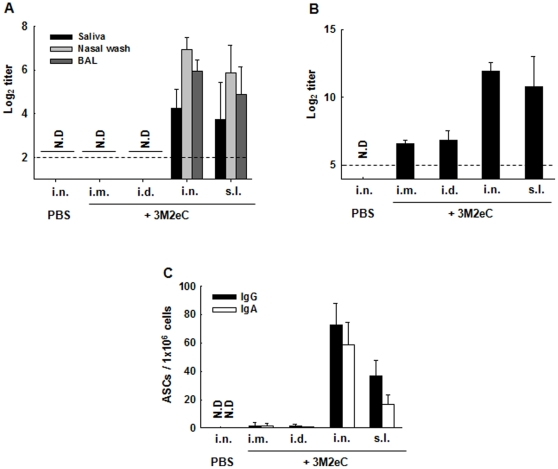 3M2eC-specific Ab levels in secretions and lung tissues. Mice were immunized with 10 ug of 3M2eC protein plus 2 ug of CT via i.n. or s.l., or with 10 ug of 3M2eC protein plus alum via i.d. or i.m. on day 0, 14, and 28. Saliva, nasal wash and BAL were collected two weeks after last immunization. M2e-specific IgA in the secretions (A) and M2e-specific IgG in BAL (B) were determined by ELISA using 3M2eC protein. (C) Number of M2e-specific IgG or IgA Ab secreting cells in the lung tissue at day 7 after last immunization was determined by ELISPOT using 3M2eC protein. N.D., not detected. The dashed line shows the limit of detection. The results are expressed as the means+S.D. for the group (n = 5). The data are representative of three independent experiments.