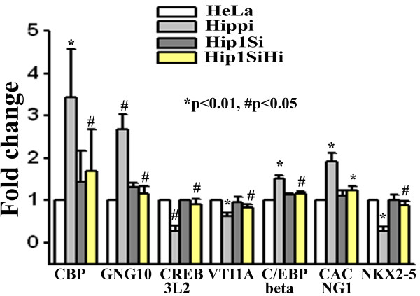 Relative expression level of some of the altered genes in microarray study determined by RT-PCR . Expression of beta actin was taken as control. Error bar represents standard deviation (n = 3). For each gene, expression level in 'Hippi' was compared with expression level in 'HeLa' and that in 'Hip1SiHi' with 'Hippi'. Significance levels of various pairs are indicated in the figure.