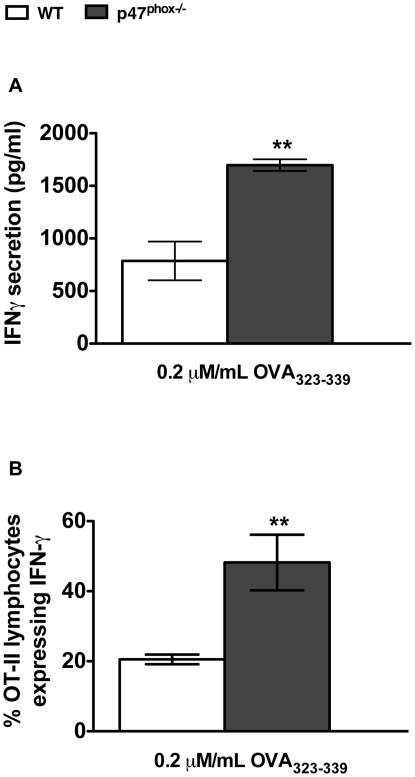 p47 phox−/− DC bias more OT-II T lymphocytes to secrete IFNγ. OT-II lymphocytes were stimulated with mature OVA 323–339 peptide-pulsed DC for 96 hours. (A) Secreted IFNγ detected in supernatants of 96 hour DC-OT-II co-cultures. The stimulated OT-II lymphocytes were rested in medium supplemented with rIL-2 for six days, and then restimulated with PMA and ionomycin for 4 hours, with monensin added for the last 2 hours. (B) Intracellular IFNγ production was then assessed by flow cytometry. Percentages of OT-II lymphocytes expressing IFNγ. The data are the mean (± SEM) percentage for 4 individual experiments with 3–4 of each genotype/experiment ** p