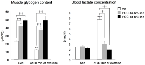 Skeletal muscle glycogen content and blood lactate concentration before and after exercise. <t>PGC-1α-b</t> transgenic mice and wild-type littermates (Wt) (each 8 weeks old) were exercised by forced running on a treadmill at 10 m/min. The speed increased 2 m/min every 3 min up to 30 m/min. Mice ran for 30 min. Skeletal muscle (gastrocnemius) glycogen content was measured before (Sed) and after 30 min of exercise (n = 3–5). Values are means ± SE. ** P