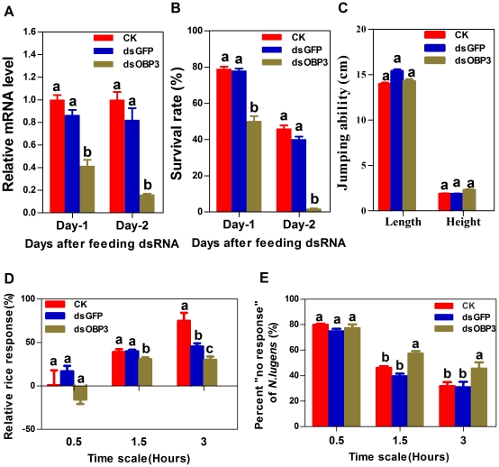 Effects of feeding NlugOBP3 dsRNA on NlugOBP3 mRNA level (A), survival rate (B), jumping ability (C), and response to rice seedlings (D-E) of BPH nymphs. CK, nymph fed with normal diet; dsGFP, fed with diet mixed with dsRNA of green fluorescent protein (0.5 mg/ml); dsOBP3, fed with dsRNA of NlugOBP3 (0.5 mg/ml). Data topped with different letters are significant different as determined using a one-way ANOVA (Duncan's multiple range test, P