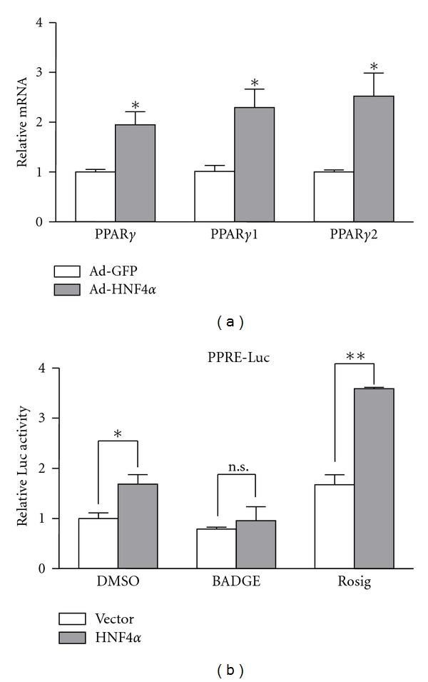 Hepatic nuclear factor 4 α (HNF4 α ) induced peroxisome proliferator-activated receptor  γ  (PPAR γ ) transcription activity in hepatocytes. (a) Quantitative RT-PCR (qRT-PCR) analysis of mRNA levels of PPAR γ  and its subtypes PPAR γ 1 and PPAR γ 2 in isolated primary hepatocytes. (b) HepG2 cells were cotransfected with plasmids of 3 × PPRE-Luc reporter plasmid with pMT7-HNF4 α  or vehicle plasmid for 24hr, and luciferase activity with PPAR γ  antagonist BADGE and agonist rosiglitazone (Rosig) was measured. The  β -gal plasmid was cotransfected as a transfection control. Promoter activities were measured by relative luciferase activity, which was normalized to that of  β -gal. Results are mean ± SEM mRNA levels normalized to that of  β -actin and expressed as fold of control group (DMSO). Results are representative of 3 independent experiments. * P