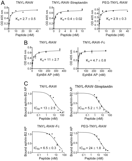 Modified forms of TNYL-RAW retain high EphB4 binding affinity and potency for inhibition of EphB4-ephrin-B2 binding. (A) Biotinylated, streptavidin-bound and PEGylated TNYL-RAW were incubated at the indicated concentrations in EphB4-coated ELISA wells. Biotinylated TNYL-RAW was detected with streptavidin-HRP, TNYL-RAW-streptavidin was detected with and anti-streptavidin antibody coupled to HRP, and PEG-TNYL-RAW was detected with an anti-PEG antibody followed by a secondary antibody conjugated to HRP. (B) The indicated concentrations of EphB4 AP were incubated in ELISA wells pre-coated with streptavidin and biotinylated TNYL-RAW (left) or an anti-IgG antibody and TNYL-RAW-Fc (right). K d values are based on EphB4 AP concentrations calculated from AP activity. (C) The different forms of TNYL-RAW were incubated at the indicated concentrations together with a constant amount of ephrin-B2 AP in ELISA wells pre-coated with EphB4 Fc. The ratio of ephrin-B2 AP bound in the presence and in the absence of peptide is shown. The graphs show averages ± SE from triplicate measurements in representative experiments, while the K d and IC 50 values are calculated from 3 to 11 experiments.