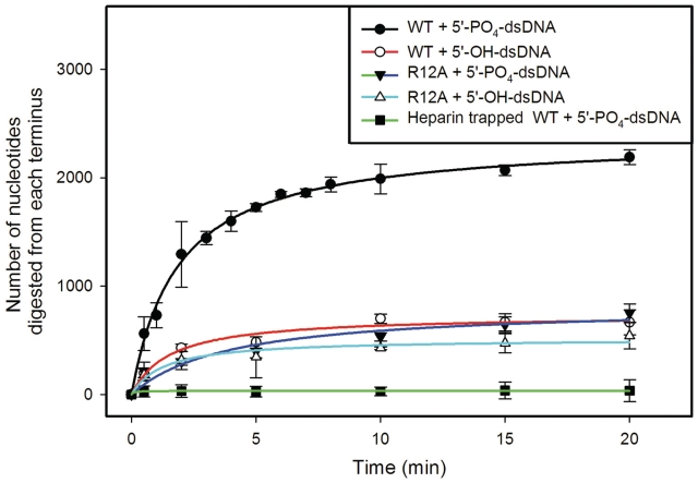 Processivity of double strand DNA digestion by wild-type LHK-Exo and Arg12Ala mutant. Time course analysis of the digestion of 5′-phosphorylated double strand DNA (5′-PO 4 -dsDNA: EcoRV-linearized pMal-c2) and 5′-dephosphorylated double strand DNA (5′-OH-dsDNA: 5′dephosphorylated EcoRV-linearized pMal-c2) substrates by wild-type LHK-Exo and the Arg12Ala mutant form using a 'heparin trap' approach. A total of 6 µg (82 pmol of trimers) of LHK-Exo or Arg12Ala mutant protein was incubated at 25°C with 60 ng (0.015 pmol) of 5′-PO 4 -dsDNA or 5′-OH-dsDNA in Tris–HCl (25 mM, pH 8.0), 1 mM DTT, 7.5 mM MgCl 2 . After 15 s, excess heparin was added to sequester all unbound protein, and to prevent disassociated protein from re-binding. Aliquots were removed at various time points (0–20 min), and dsDNA levels were determined using fluorescent PicoGreen assays, to enable the extent of DNA digestion to be calculated. In one set of assays, heparin was added to LHK-Exo prior to the addition of dsDNA substrate, to confirm the efficacy of the heparin trap method (filled black squares, green line). Graphs show the mean number of nucleotides digested from each terminus (±SD; y -axis) plotted against the time of analysis (in minutes; x -axis).