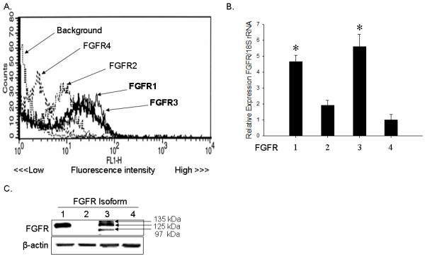 Abundant FGFR1 and FGFR3 expression in articular chondrocytes . (A) Human articular chondrocytes were incubated with anti-CD32/CD16 monoclonal antibody to block nonspecific antibody binding. FGFR1, FGFR2, FGFR3, and FGFR4 antibodies were incubated with cells, followed by incubation with a secondary antibody, goat-anti-rabbit Alexa Fluor 488. Cells were also incubated with goat-anti-rabbit Alexa 488, or non-immune rabbit serum plus goat-anti-rabbit Alexa Fluor 488 as controls. FGFRs on the plasma membrane of chondrocytes were analyzed with a FACS Calibur instrument and CellQuest software. (B) Human articular chondrocytes in monolayer were subjected to RNA extraction, cDNA synthesis, and qPCR quantification of FGFR isoform expression. * P